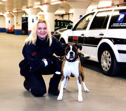 hundträning Stockholm